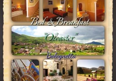 Bed And Breakfast Oleaster